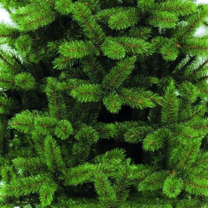 Пихта Triumph Tree